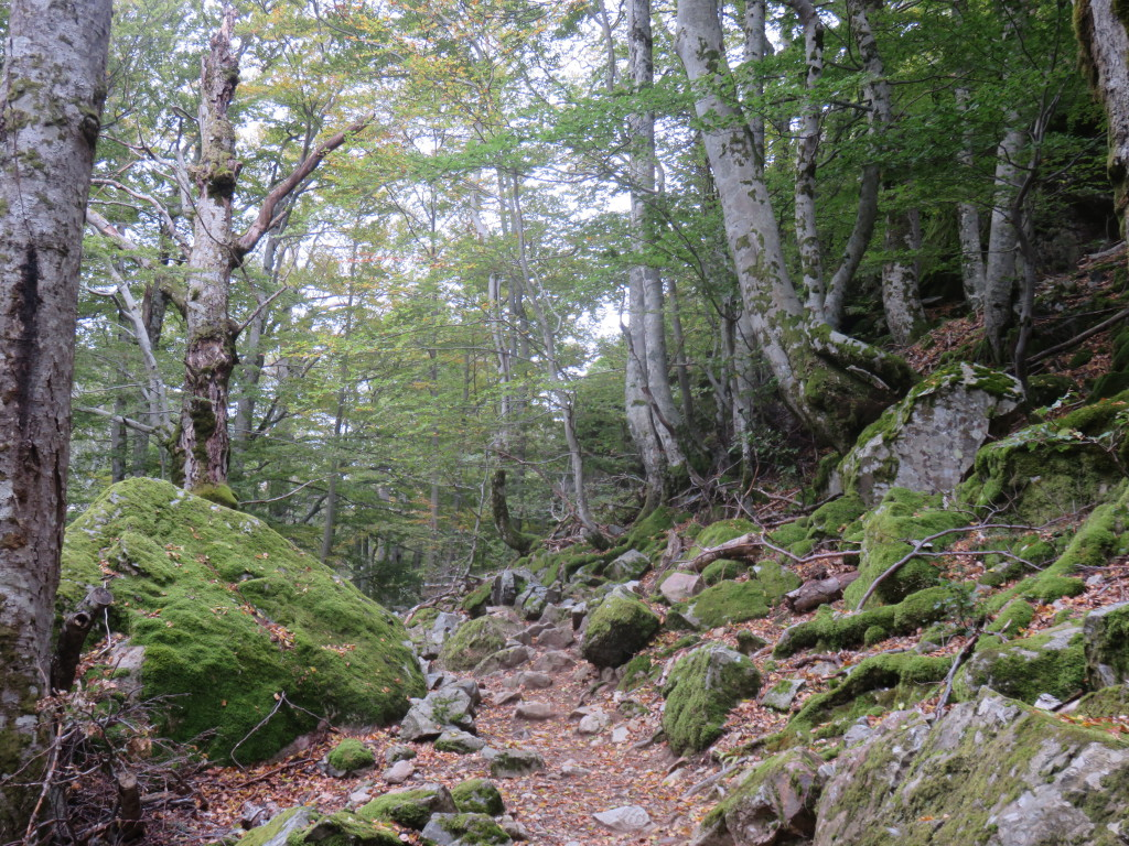 Forests were plenty as we made our way South to the halfway point at Vizzavona.